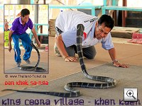 King Cobra Village - Khon Kaen (Ban Khok Sa-nga)