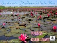 Thale Bua Daeng - See der roten Lotusblumen bei Udon Thani